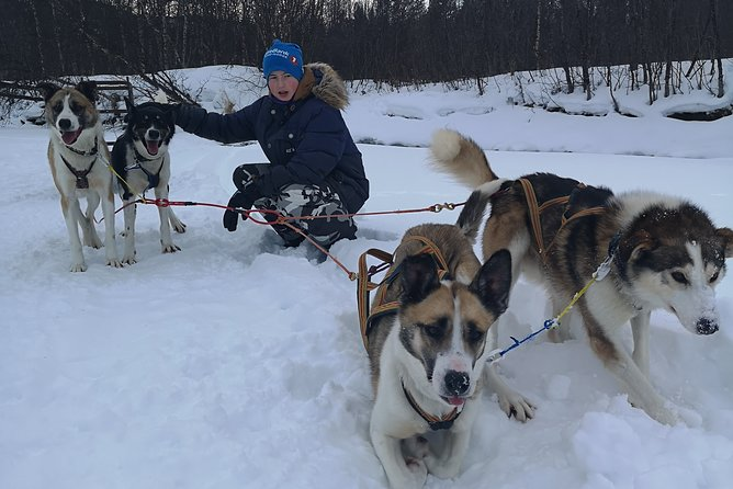 We are a small family who is passionate about huskies and we love to share this passion with travellers from all over the world. <br>we normally take up to 4 people at the time so we can offer you a personal and unique experience. <br>During the winter time, you might also experience the Northern Lights during the trip if you are lucky!<br>Remember the photo camera dogs love to be photographed, the dogs are very happy when guests arrive so be ready to take pictures and very important warm lingerie to yourself and good mode