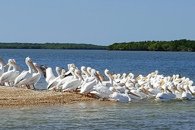 Full-Day Everglades Naturalist-Led Adventure: Cruise, Hike, and Airboat, Miami, FL, ESTADOS UNIDOS