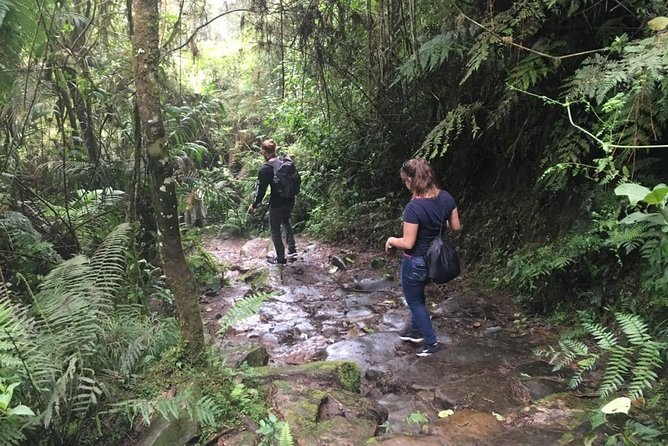 Hiking Adventure to Chicaque National Park, Cloud & Oak Forests—Birdwatching, Bogota, Colômbia