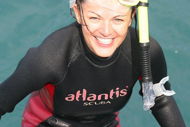 Dolphin Swimming and Watching E-Ko-Tour from Picton, Picton, NOVA ZELÂNDIA