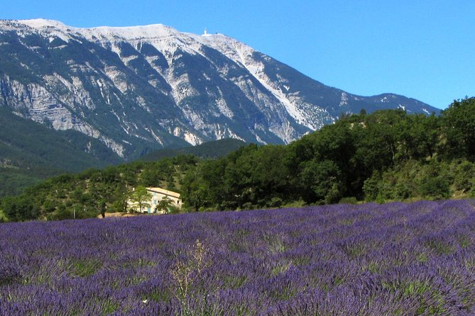 The Lavender Country - FD Private Tour with Professional Guide, Aix-en-Provence, FRANCIA