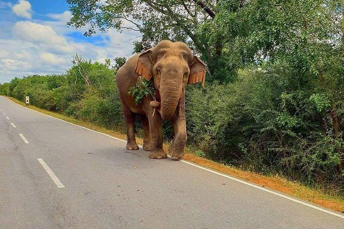 4 Days Essence Of Sri Lanka, Anuradhapura, Sri Lanka