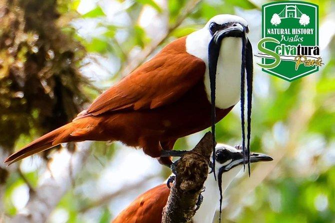 Recorrido de día completo del bosque nublado de Monteverde desde San José, San Jose, COSTA RICA