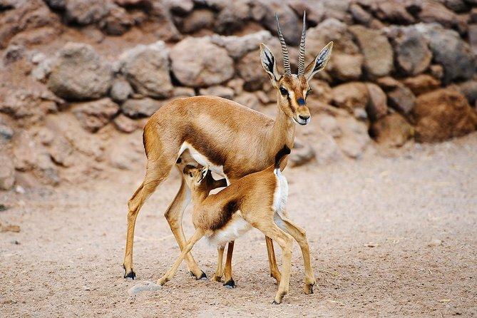 Oasis Wildlife Fuerteventura: Entrance Ticket Only, Fuerteventura, ESPAÑA