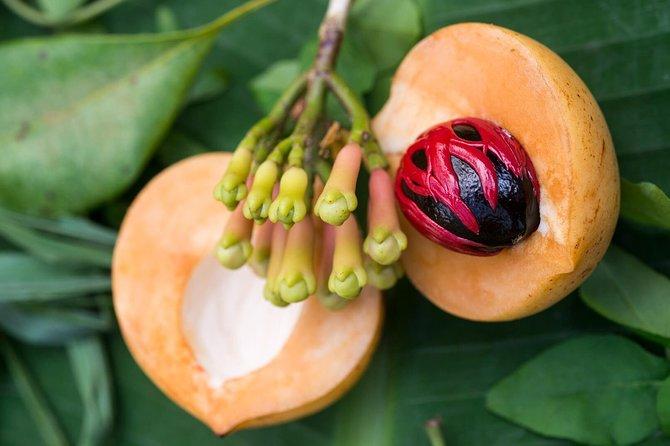 Recorrido a pie de medio día por Spice Farm, en Zanzíbar, Zanzibar, TANZANIA