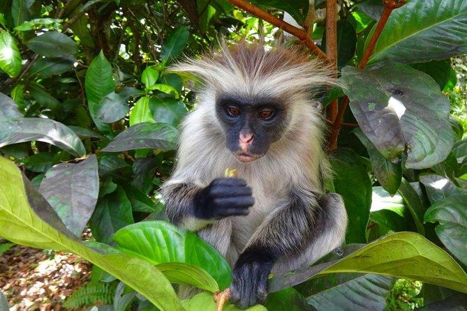 Jozani Forest Reserve Half-Day Guided Tour from Zanzibar, Zanzibar, Tanzania