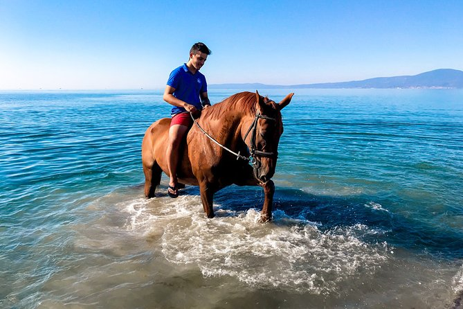 Swim with a Horse in Kalamata, Kalamata, GRECIA