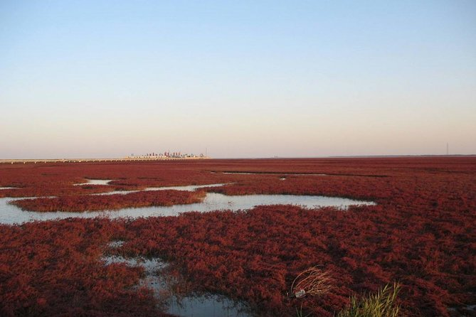 All-Inclusive Private Day Tour to Red Beach in Panjin City from Shenyang, Shenyang, CHINA