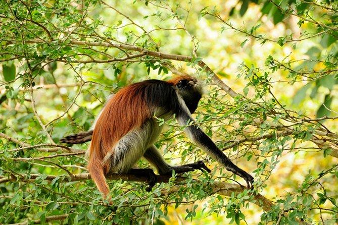 MÁS FOTOS, Jozani Forest National Park and Jambiani Village Tour