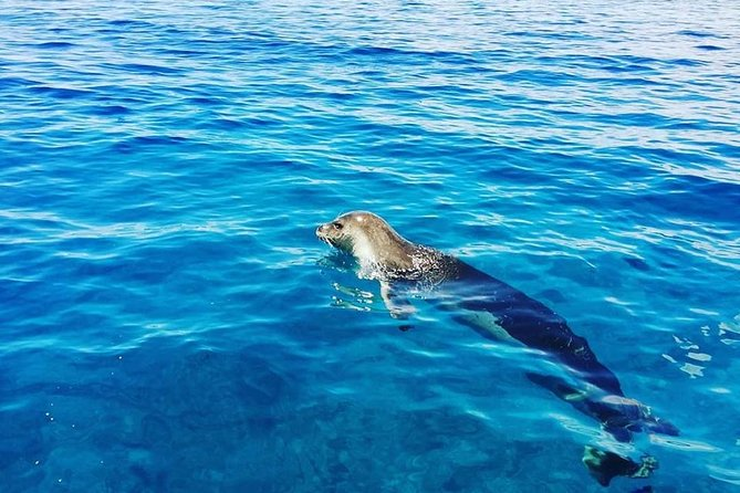 Whales and Dolphins watching Tour in the best area of Madeira!, ,