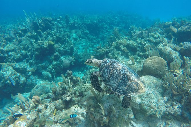 Shore Excursion: See Roatan by Land and by Boat, Roatan, HONDURAS
