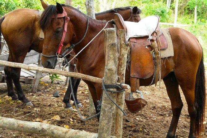 Roatan Half-Day Combo Horseback Riding with Zip Line Monkey & Sloths & Snorkel, Roatan, HONDURAS