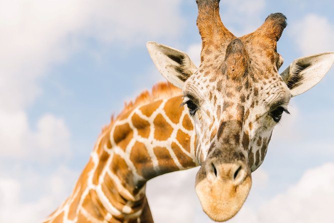 MÁS FOTOS, Central Florida Everglades and Safari Park Tour