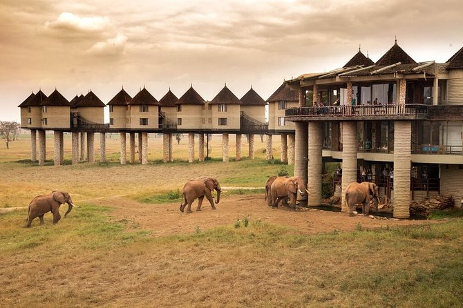 Salt Lick Lodge is located in the heart of a private Wildlife Sanctuary which lies adjacent to Tsavo National Park, therefore playing an increasingly important role in the protection and conservation of Kenya's wildlife heritage.  All rooms are built in two storey blocks from a central pod and linked together by elevated platforms overlooking a salt slick and small waterhole.<br><br>Early morning and late afternoon game drives provide an ideal opportunity to view and photograph the diverse array of wildlife within the sanctuary. The water holes below provide a wonderful opportunity to view animals at close proximity in their habitat.<br><br>The lobby and terraced bar offer excellent views and photographic opportunities, while an underground tunnel and bunker with ground level windows provides unbelievably close, yet safe access to variety of animals as they drink water. Night game drive provide guests with an opportunity of seeing animals not usually encountered on daytime game drive.