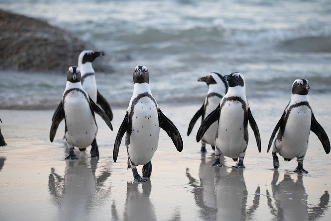 Robben Island Tickets, Penguins & Cape of Good Hope Private Tour, Cidade do Cabo, África do Sul