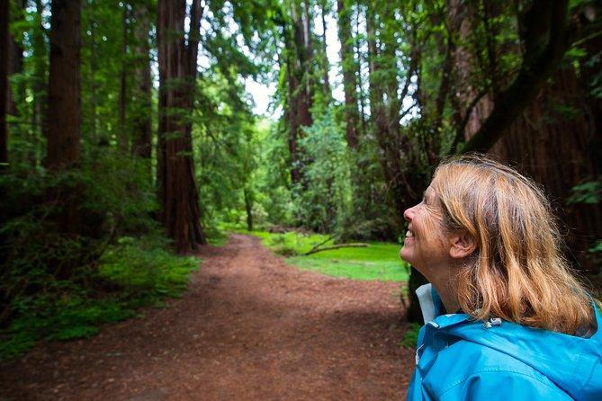 San Francisco superahorro: Muir Woods y región vinícola con almuerzo gourmet opcional, San Francisco, CA, ESTADOS UNIDOS
