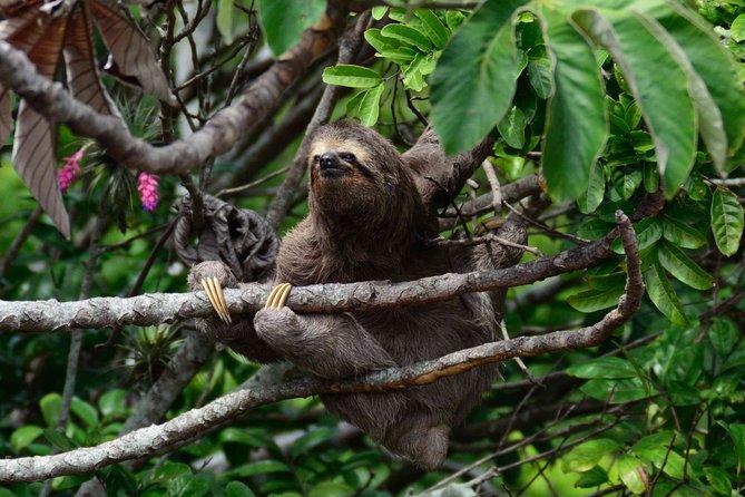 Private Tour: Llanos Del Cortez Waterfall & Rainforest Sloths Watching, Tamarindo, COSTA RICA