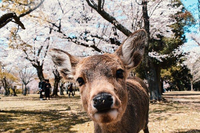 Private Hiace Hire in Osaka Kyoto Nara Kobe with English Speaking Driver, Osaka, JAPON