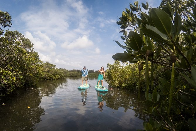 Immerse yourself in a preserved environment, rich in endemic wildlife. The mangrove is a unique ecosystem where specific vegetation grows, offering a protected area for a lot of birds, crabs, and fishes.
