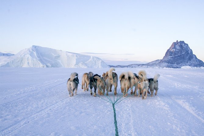 On the Cultural Experience & Dog Sledding tour, you will experience peace while riding the dog sled (for 7 days) and maybe even become one with nature. You will meet plenty of warm, welcoming, and kind local people, eat authentic Greenlandic food at a family's home, see different settlements, and learn about their culture and history.<br><br>We recommend this tour if you want to explore Greenland in a different, unique way.<br>