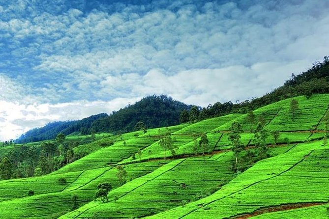 """""""Nuwaraeliya"""" known as little England. Experience the beauty of Sri Lanka with our friendly service.<br><br>Our guides and drivers are well experienced and friendly. Your satisfaction is our priority. You can get any info you want regarding your tour or visit in Sri Lanka from us. We are really happy to serve you and have the best and memorable experience during the tour. Just ask your driver/guide for any kind of requirement as they are happy to help you."""
