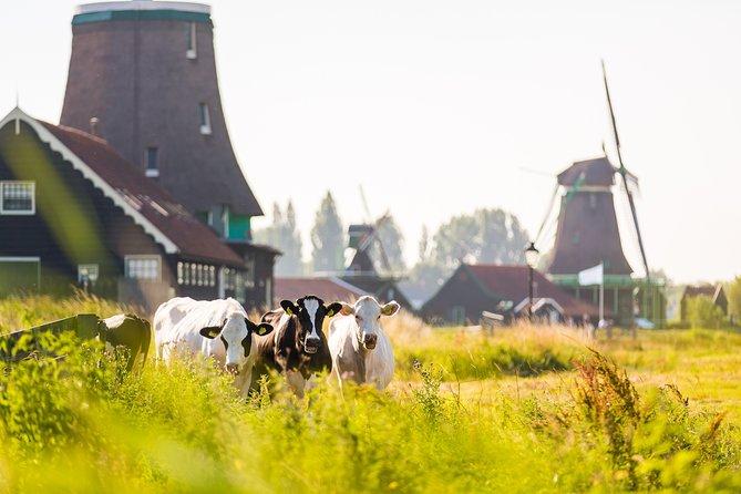 Viagem diurna pelos moinhos holandeses e a zona rural saindo de Amsterdã, incluindo degustação de queijos em Volendam, Amsterdam, HOLANDA
