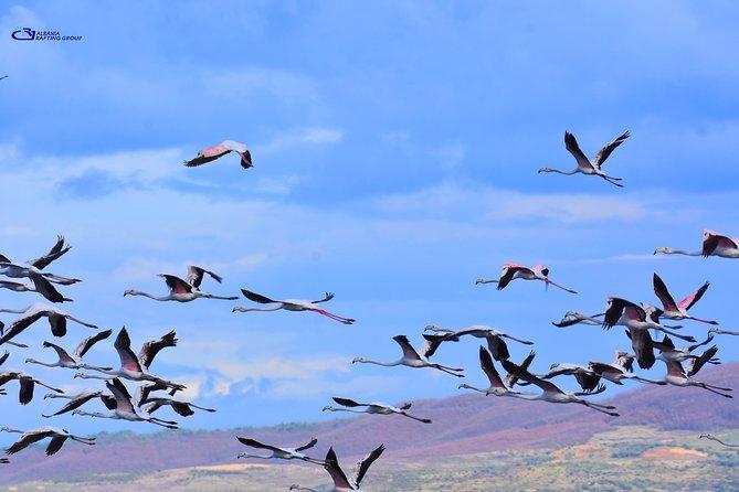 Albania Birdwatching, Kayaking, Bicycle National Park Divjaka Karavasta(ARG), Tirana, Albania