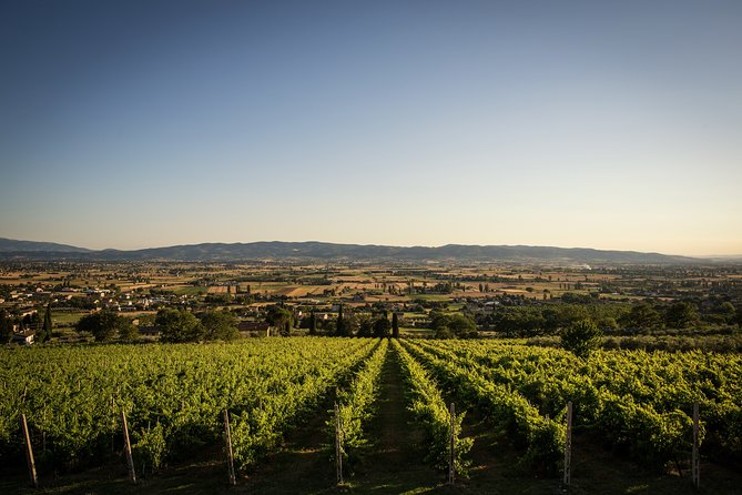 Open-air Wine Tasting with Panoramic View, Assisi, ITALY