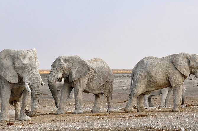 Prepare for a mindblowing 4-day trip. Experience Africa's amazing wildlife and enjoy the unique sceneries of Damaraland, Brandberg and Swakopmund.