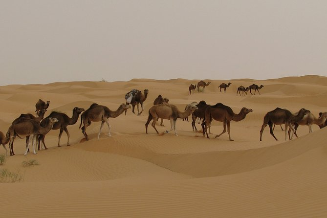 MÁS FOTOS, Camel riding Adventure at Great Oriental Erg 7Days/ 6 Nights