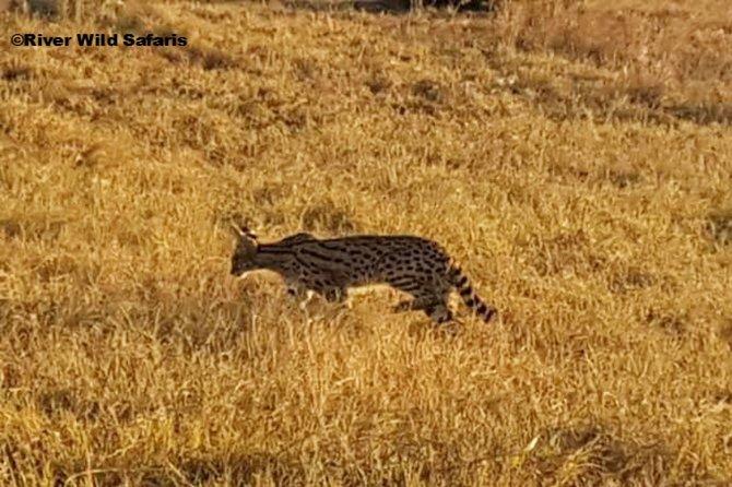 Night Game Drive - Zambezi National Park - River Wild Safaris, Cataratas Victoria, ZIMBABUE