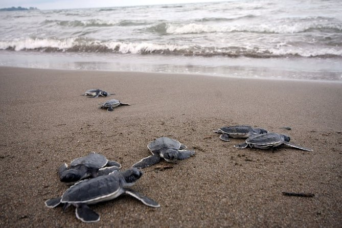 Preserving Baby Sea Turtles And Filling You With Energy In Bioluminescent Lights, ,