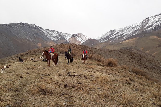 Private Full Day Horseback Riding and BBQ up in the Mountains, Mendoza, ARGENTINA