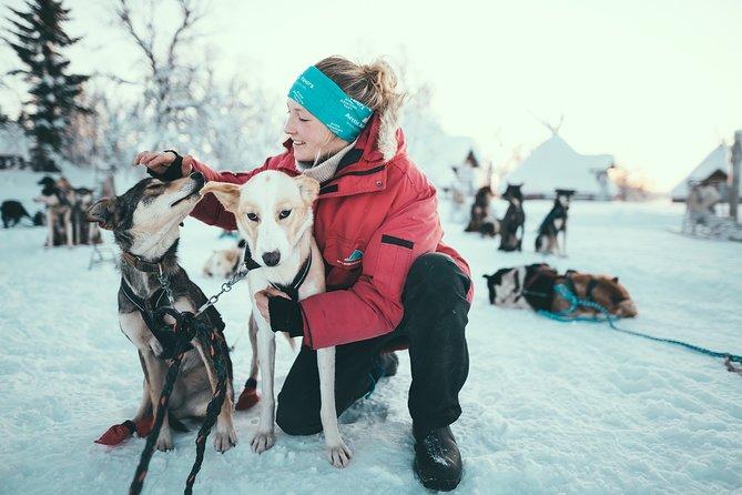 Tromso: Husky Sledding Self-Drive Adventure, Tromso, NORUEGA