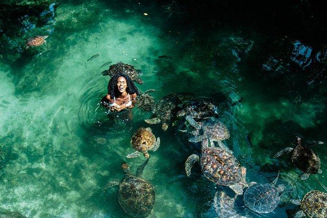 MÁS FOTOS, Swimming with turtles Zanzibar