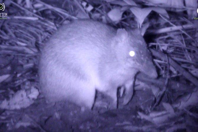 Byron Bay Night Vision Walk, Byron Bay, AUSTRALIA