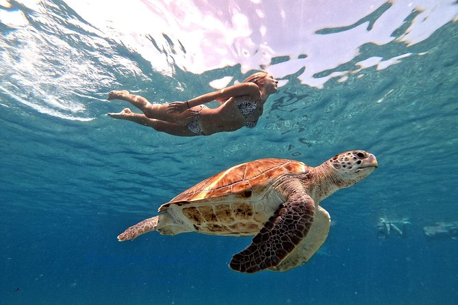 "THE ORIGINAL! PICTURES FOR FREE! A/C BUS<br>More snorkeling time in the water. More time in the water is more Fun! We have the longest snorkeling time for you. The sea turtles are on the beach!<br>We are a german tour company ""Curacao Dreams Travel"". Book your excursion by us.<br>We have the best service and no time presure! <br>Our bus trip to the turtles is taking 35-40 minutes!!<br>1. Stop: Snorkeling with sea turtles. I'm Patrick, your guide for this amazing snorkel trip! I'm in the water with you and make nice picture from the sea turtles. The turtles come naturally. The best underwater experience for young and old. We are in the low water to see the sea turtles.No boat.<br>Snorkel time by the turtle beach, 1 hour. Amazing pictures from the turtles for free via Apple Airdrop, Messager FB or WhatsApp.<br>2. Stop: Grote Knip - MOST BAUETIFUL BEACH ON CURACAO <br>Beach stop 40 minutes. ( A gift for you )<br>3. Stop: Flamingos - This stop is a GIFT for you!!! We stop by the free living Flamingos. ( A gift )"