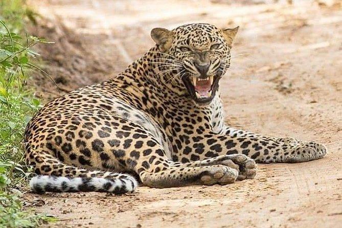 Yala Safari Half Day Tour (Game Drive), Parque Nacional Yala, SRI LANKA