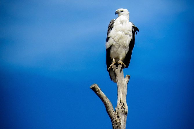 Kangaroo Island 75-Minute Ocean Safari, Isla Kangaroo, AUSTRALIA