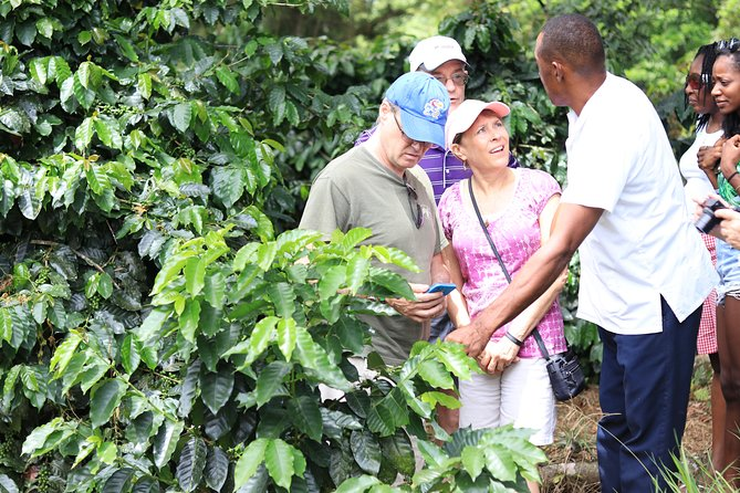 Get a taste of Jamaica during this culture and food tour from Ocho Rios. Drive through Fern Gully, a tunnel of lush tropical ferns that lines the road between Colgate and Ocho Rios, stopping for photos on the way. Learn about Jamaica's culture and history from your tour guide as you drive through the countryside's quaint villages. Taste local tropical fruit from a roadside stand and enjoy a beach side lunch of ackee, codfish and traditional Jamaican jerk chicken. All food tastings, choice of Red Stripe or Rum Punch, lunch and round-trip transportation from Ocho Rios hotels are included.<br><br>The Farm and Garden will feature<br><br>Native Chicken<br>Rabbit Ranch<br>Organic Vegetables Garden<br>Medicinal Herbal Garden (Over thirty species of Jamaican Medicinal Herbs on display)<br>Coffee Farm<br>Tobacco Farm<br>Flowers Garden<br>Ground Provision<br>Medicinal Herbs<br><br>