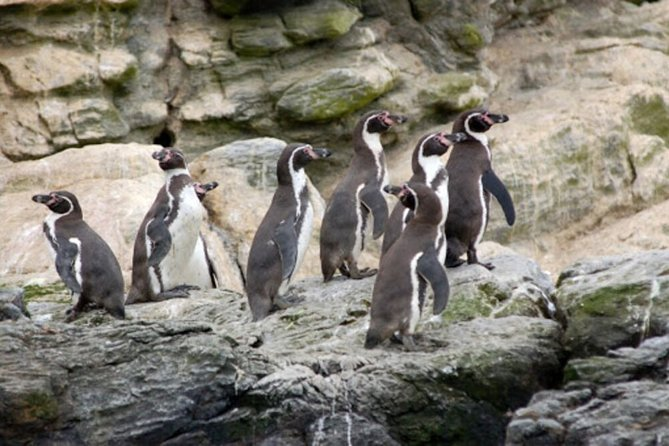 We will visit the Humboldt Penguin National Reserve, sailing around Choros Island to identify marine fauna. We will disembark on Isla Damas, beautiful island of white sands and crystal clear waters. Returning to the Contintent, we'll have lunch at a typical food restaurant and we will also know the process of making the olive oil. Then we'll look for terrestrial wildlife like foxes and guanacos.<br><br>We will finally return to La Serena during the afternoon.