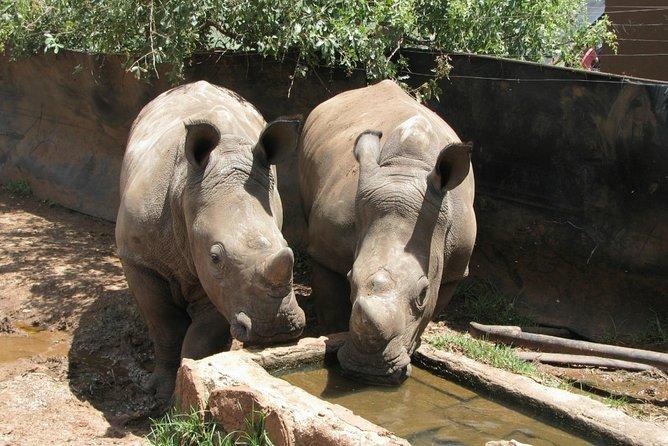 Rhino and Lion Park Guided Safari from Johannesburg or Pretoria, Johannesburgo, África do Sul