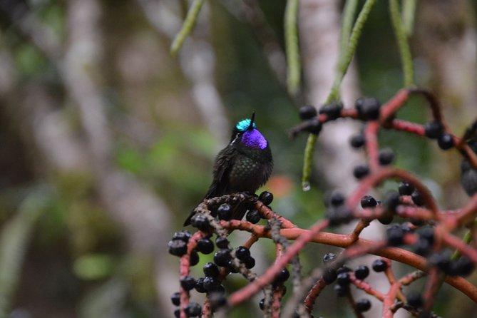 Grupo pequeño - Caminata de historia natural - mañana o tarde, Puntarenas, COSTA RICA