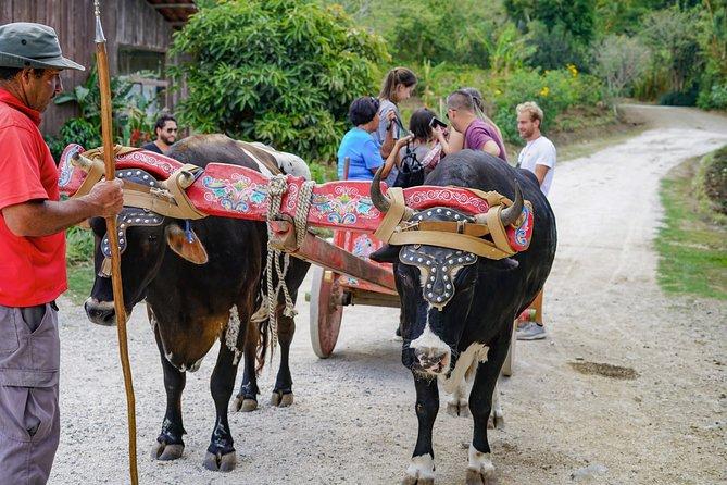 El Combo Perfecto: tour de café, almuerzo, y tour del bosque nuboso, Puntarenas, COSTA RICA
