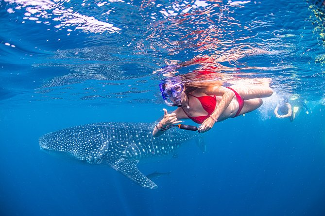 Uniquely we offer free use of Dive Scooters, Free Photos, Stand Up Paddle boards, the best Swim Guarantee on the reef. <br>
