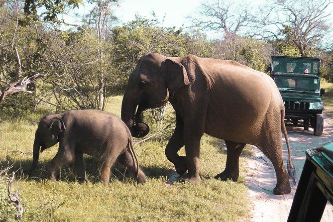 Private Safari Tour in Yala National Park Sri Lanka, Parque Nacional Yala, SRI LANKA