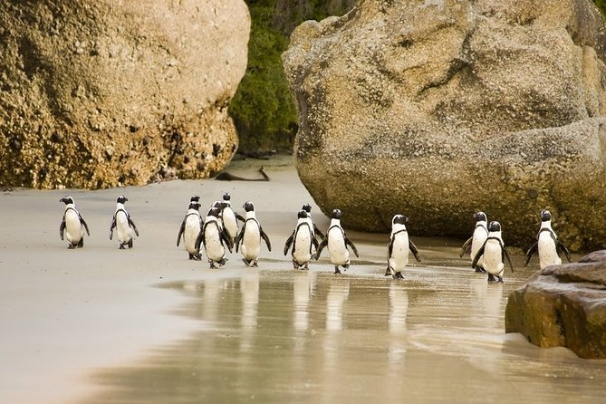 Join us on this half day tour and have the pleasure of visiting the penguin beach and many other sites without having to be on a prolonged full day tour.There will be multiple stops to take pictures and a few more to grab coffee,juice or a quick bite to go.Guest joining us on this tour are rest assured to see the beautiful landscapes the cape has to offer and get ample time to see the penguins which are the main attraction on the agenda.