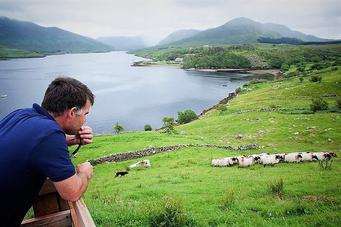 Visit a traditional working Connemara mountain sheep farm;<br>Meet the farmer and his highly trained sheepdogs;<br>Watch a sheepdog herding demonstration;<br>In the summer months see a sheep shearing demonstration;<br>Try your hand at bog-cutting using the slean (turf spade).<br>