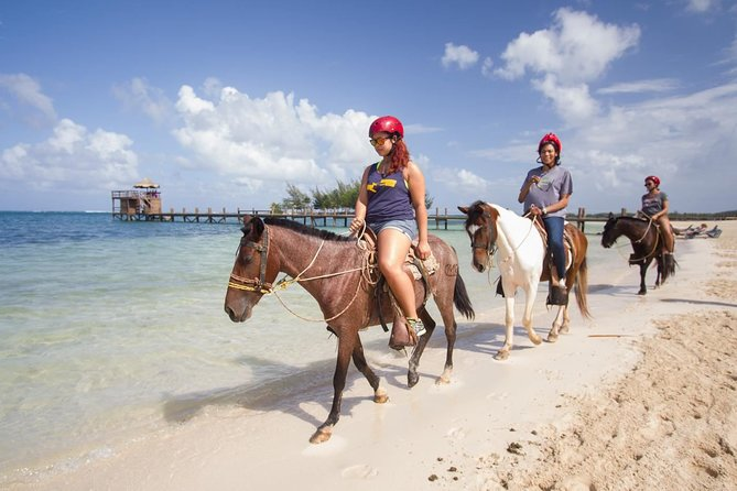 Enjoy a day full of extreme adventure Horseback Ridding, Zip Lining, visit to the Monkey and Sloths Sanctuary, before discovering some the island marine wildlife colorful coral and fishes and everything else that swim by and around the reef and the drop off wall.