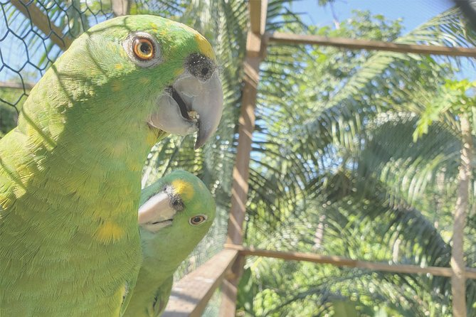 Shore Excursion: Roatan Monkey/Sloths Park Iguana and Butterfly Farm and Beach, Roatan, HONDURAS